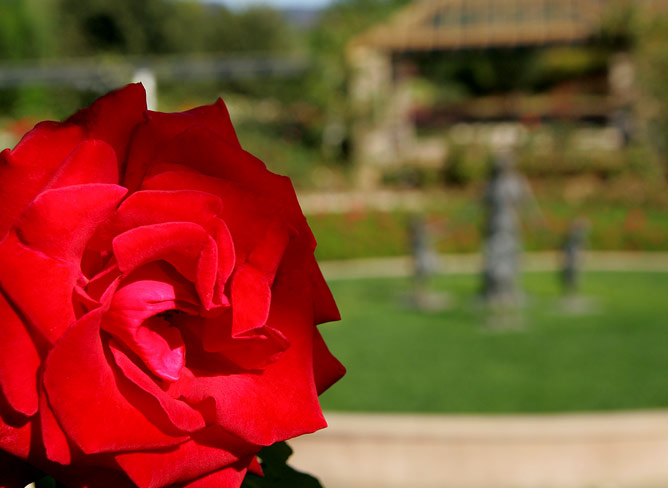 Rose Garden at Hunter Valley Gardens
