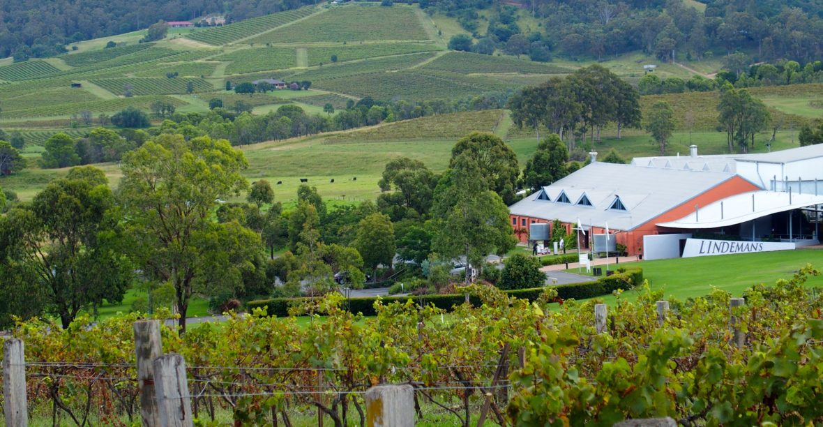 Historic Ben Ean vineyard bought by wine industry leaders