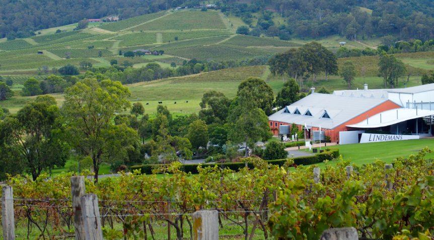 Historic Ben Ean vineyard bought by wine industry leaders
