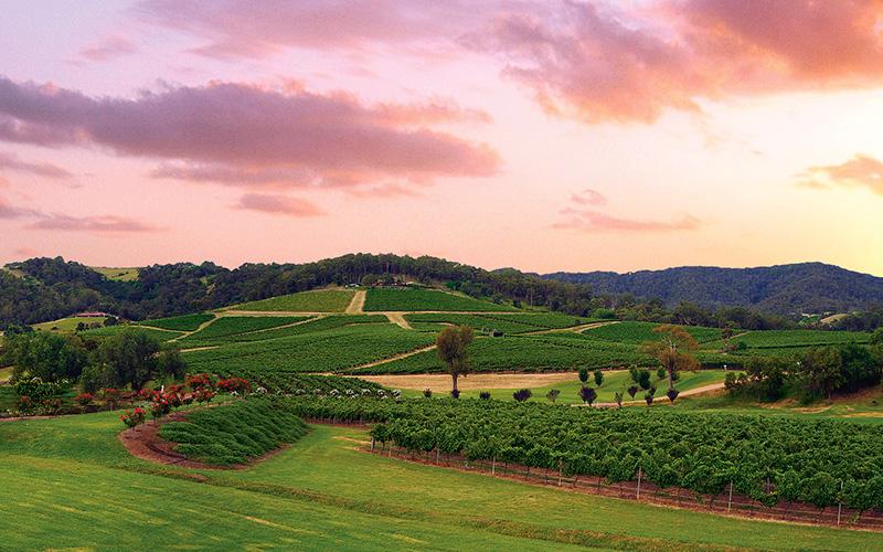 Ivanhoe Wines Hunter Valley Vineyard