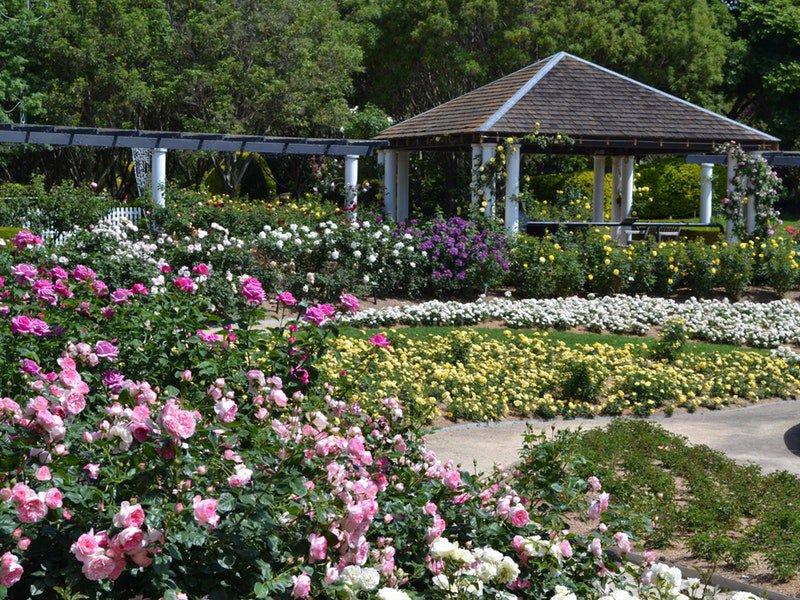 Hunter Valley Gardens Rose Spectacular