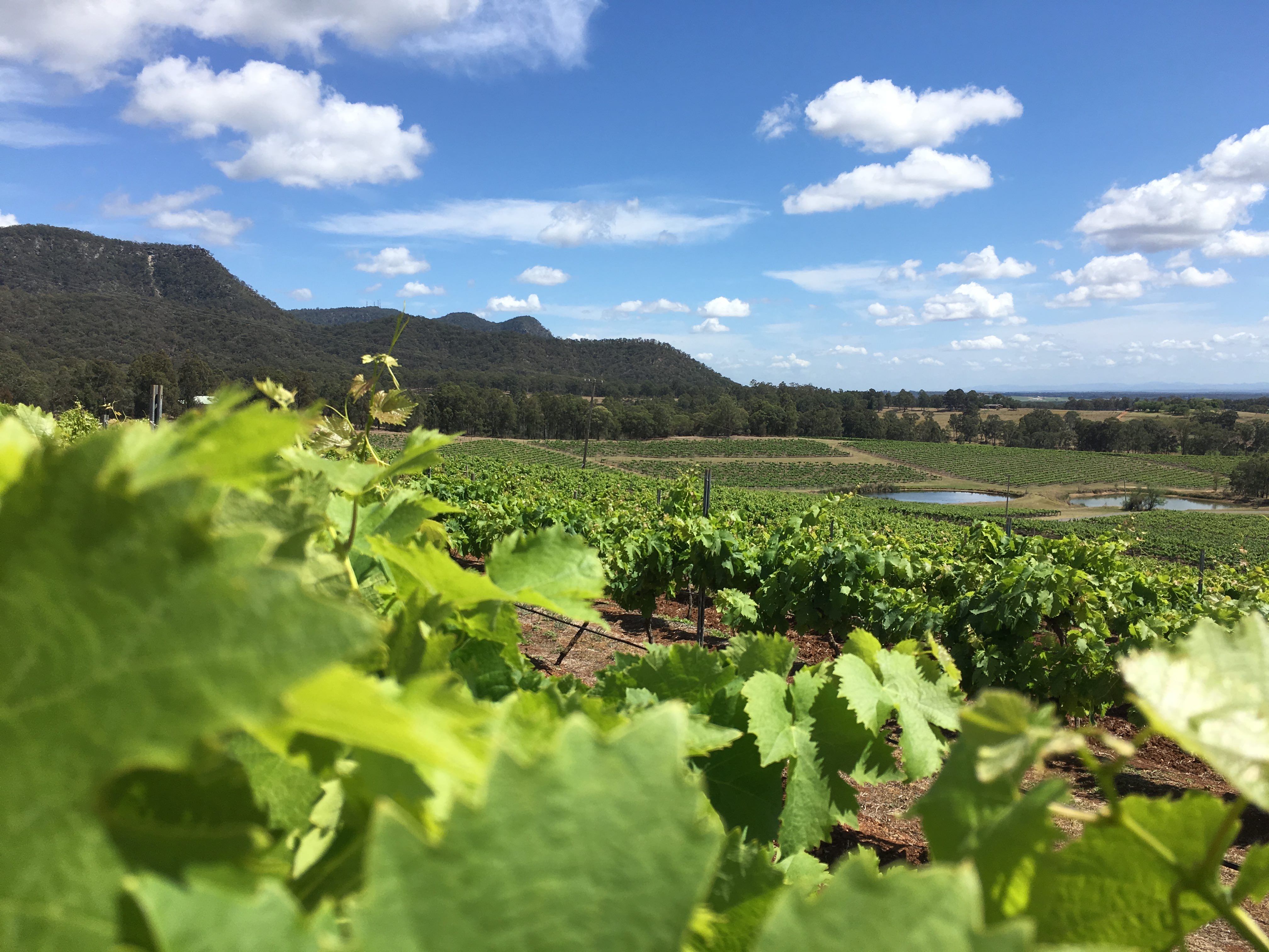 Places to Picnic in the Hunter Valley