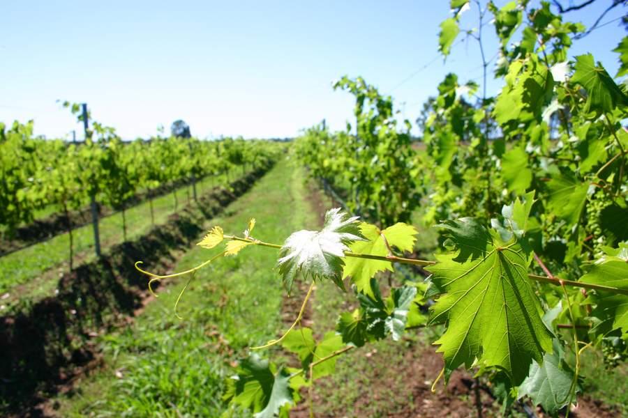 Tamburlaine Organic Wines Pokolbin Hunter Valley