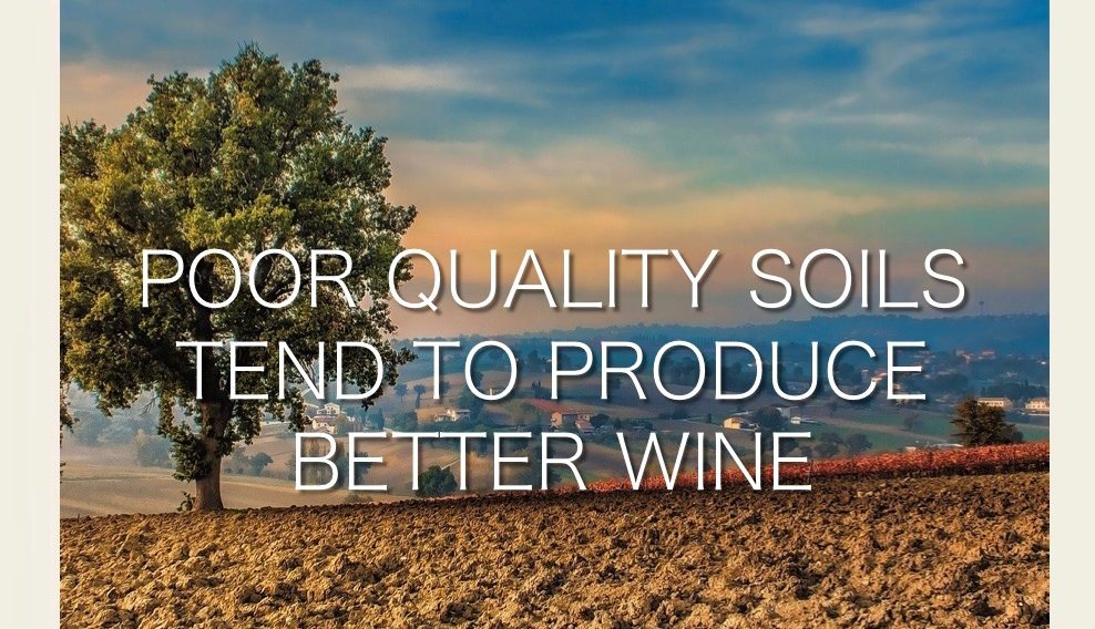Poor quality soils tend to produce better wine. The Vintry | Hunter Valley Accommodation
